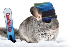 Cool chinchilla with fleece outfit
