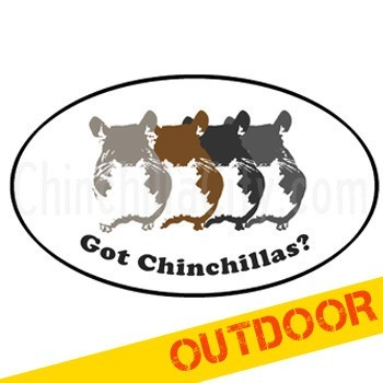Got Chinchillas? Oval Car Magnet