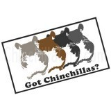 """Got Chinchillas?"" Magnet"